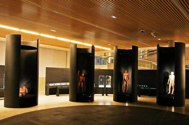Museo Evolución Humana (MEH)