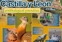 Castilla y León, Paraíso ornitológicoCastilla y León, Ornithological paradise