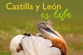 ¿Why Castilla y León?