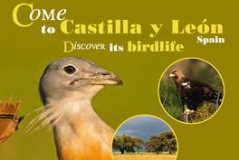 Come to Castilla y León. Discover its birdlife