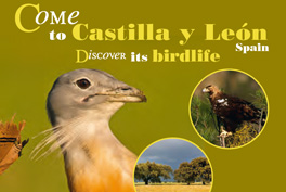 Come to Castilla y León. Discover its birdlife