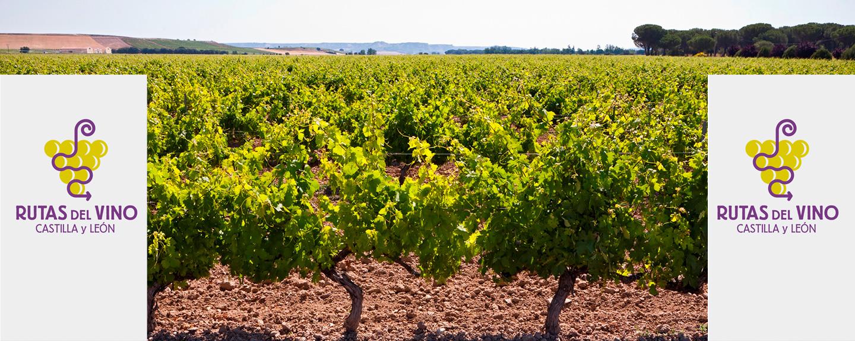 Rutas del Vino