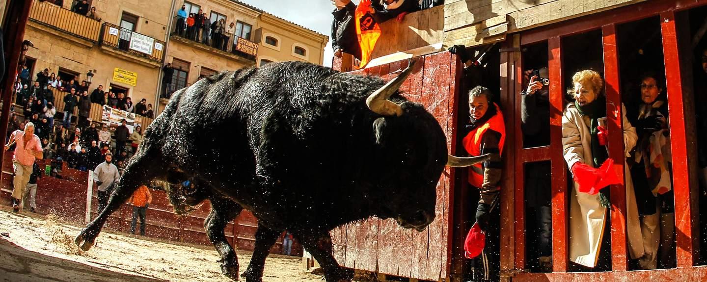 Fiestas tradicionales, Carnaval del Toro - CIUDAD RODRIGO