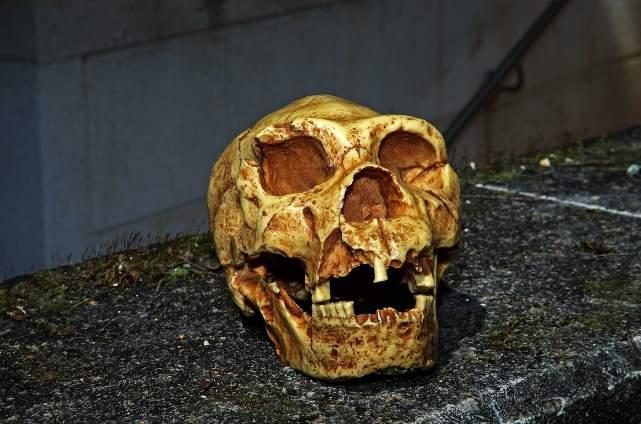 Yacimientos de Atapuerca. Craneo de Miguelon