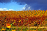 Rutas de vino