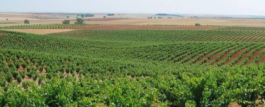 Ruta del Vino de Zamora 01