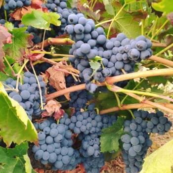 Ruta del Vino de Zamora 02