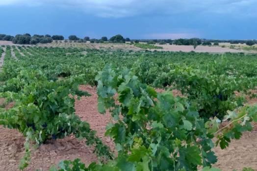 Ruta del Vino de Zamora 03