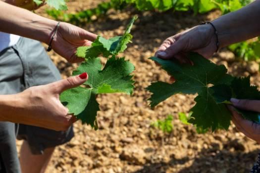 Ruta del Vino de Zamora 13