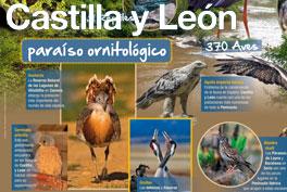 Castilla y León, Paraíso ornitológico
