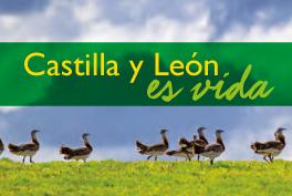 ¿Por qué Castilla y León?